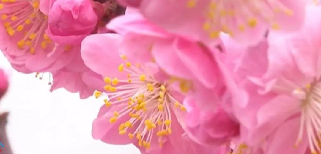 """真相了!原来花粉过敏的""""元凶""""不是花,而是树和草!"""
